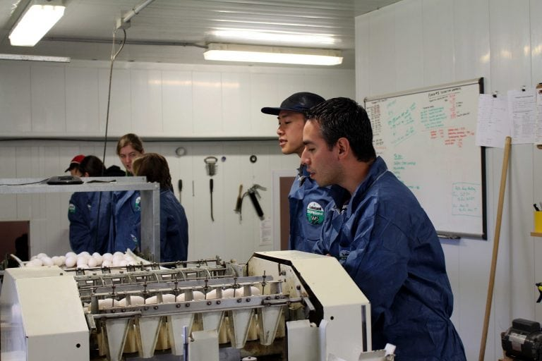 Students watch eggs being graded