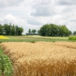 Trial at Elora Research Station - Crops