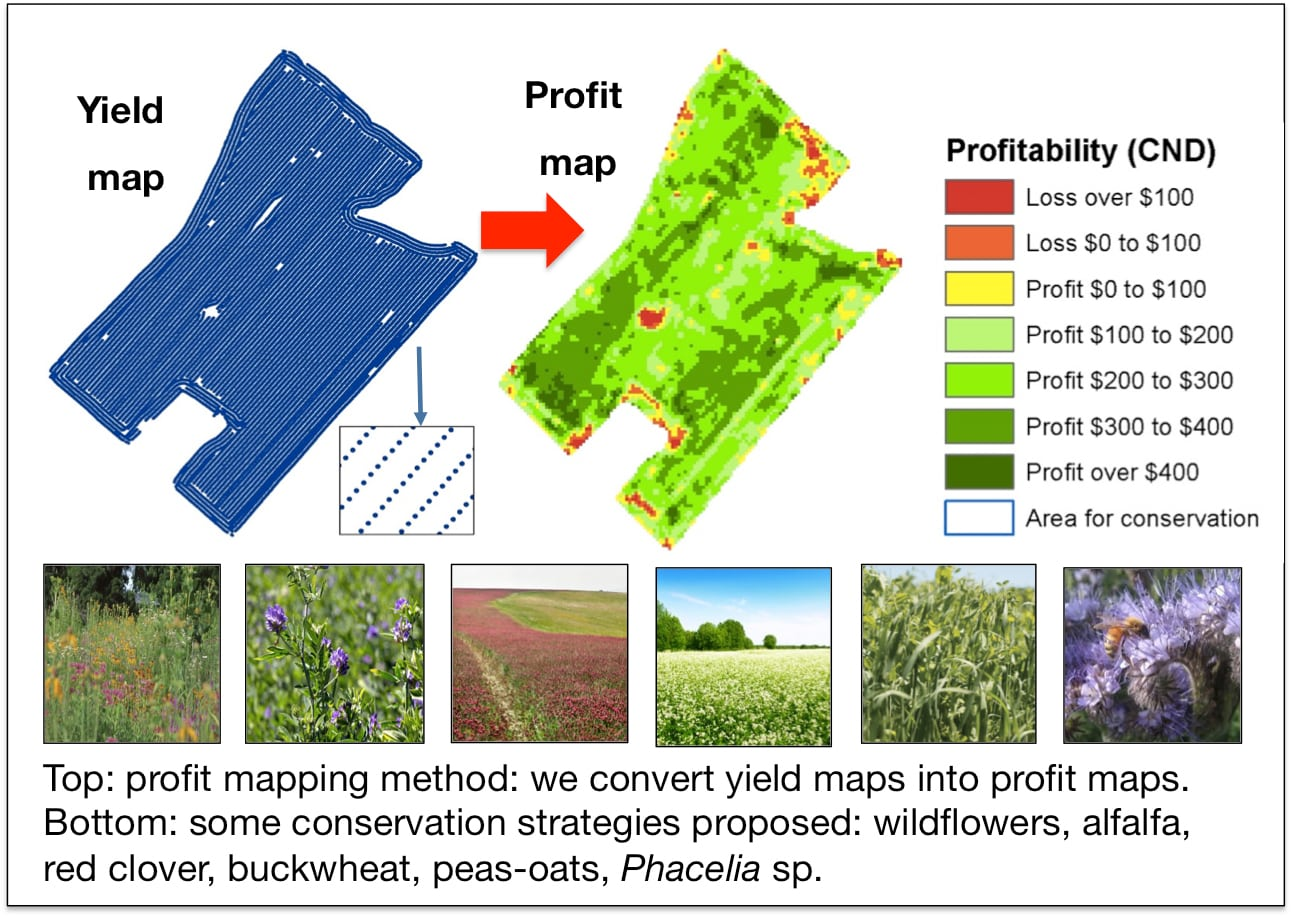 Figure showing profitability mapping. On the top is the profit mapping method: we convert yield maps into profit maps. On the bottom: some conservation strategies proposed - wildflowers, alfalfa, red clover, buckwheat, peas-oats and Phacelia sp.