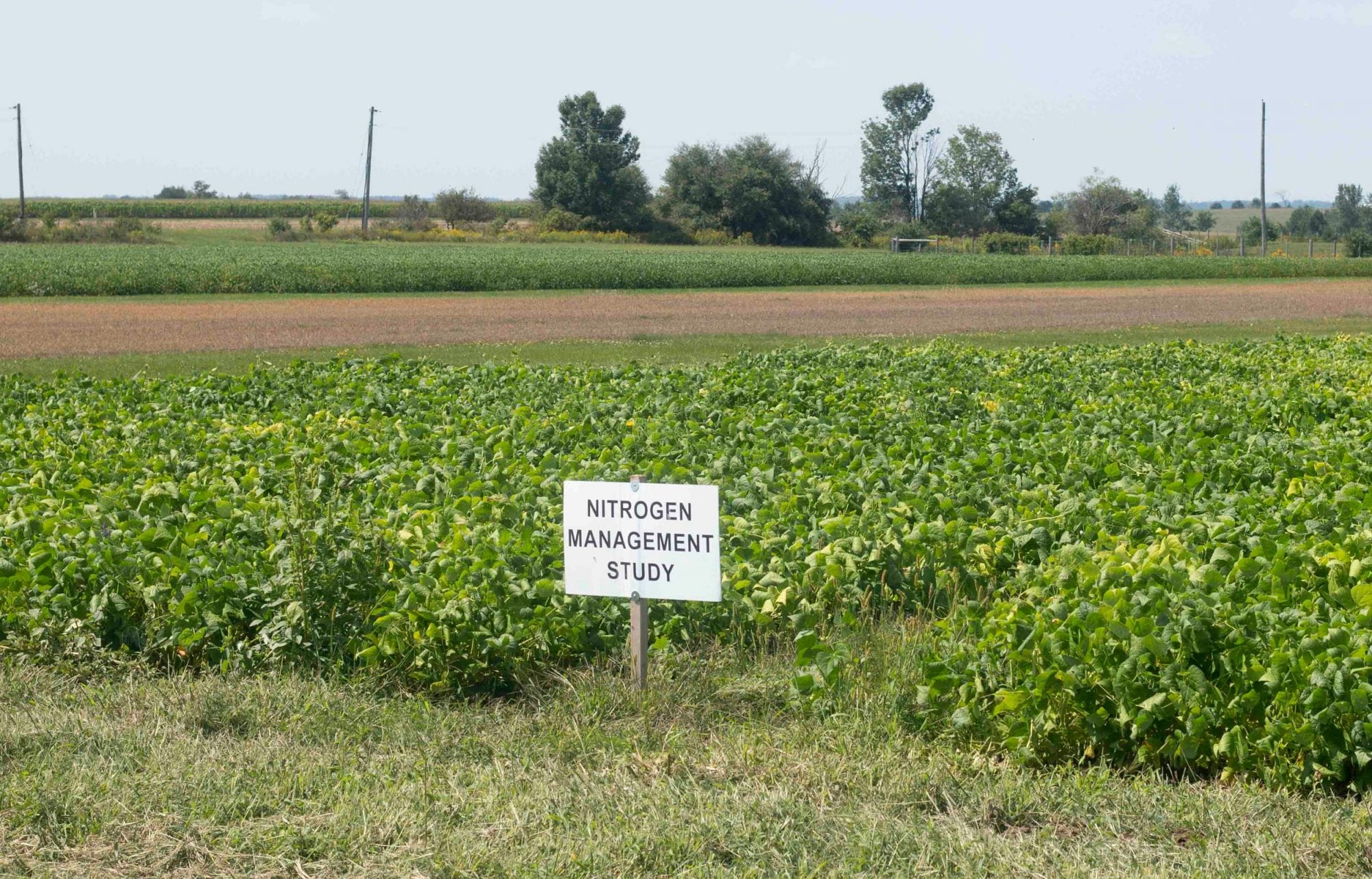 Cropping Systems – White Bean Diversity and Nitrogen