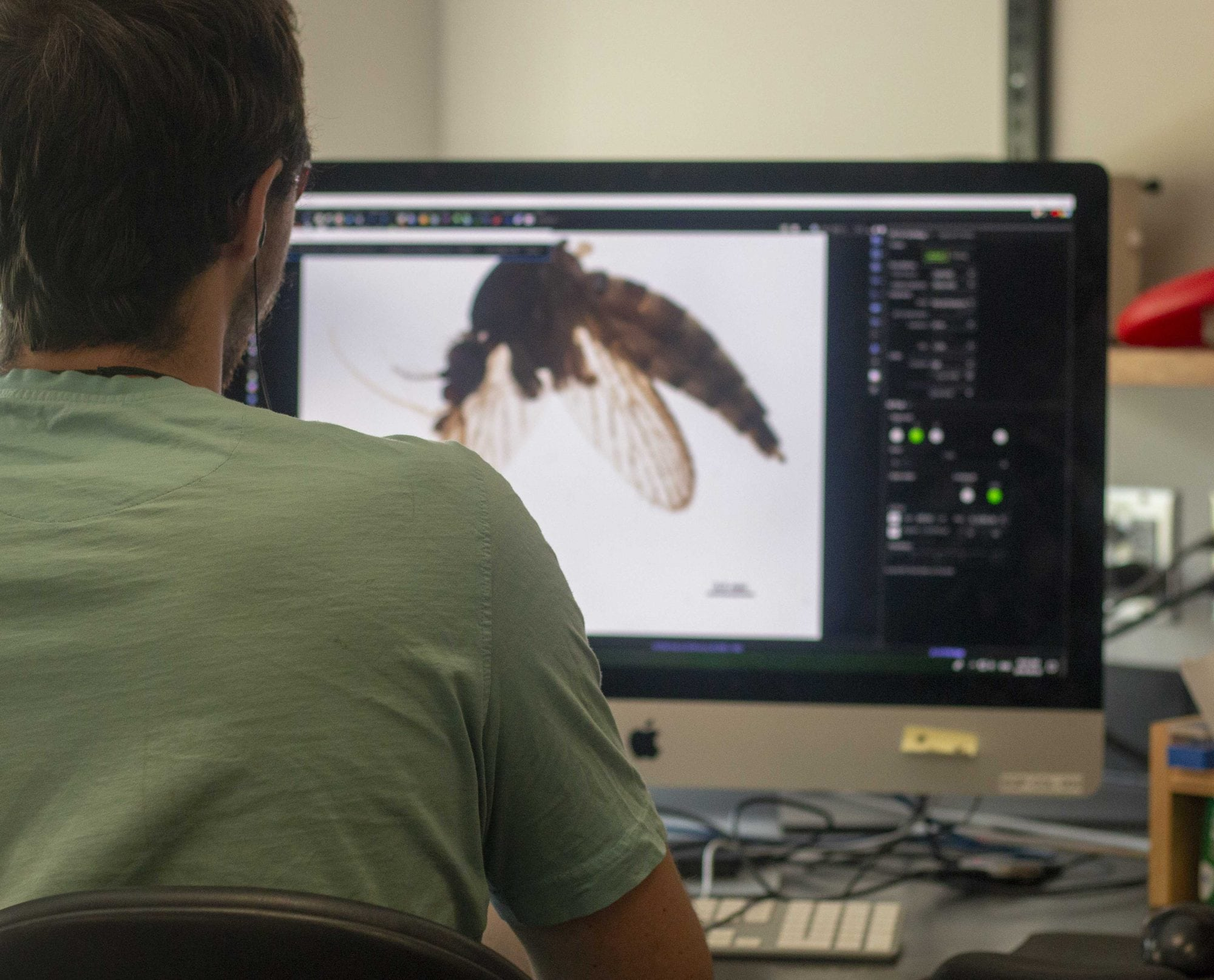 Looking at a high-res photo of a sample on a large Mac computer