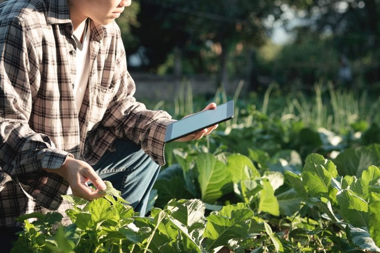 Person leaning down in field with iPad