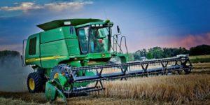 Grain harvest in field