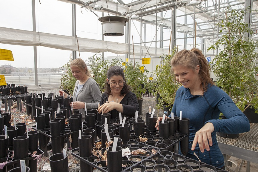 Three researchers sort samples in a greenhouse